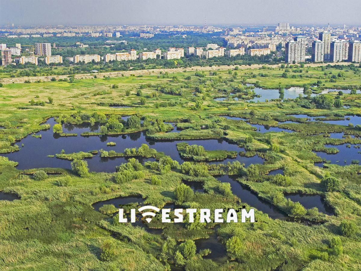 GREEN CITY`S LAB (livestream)